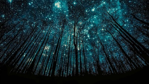 Blue Stars and Trees_500x281.jpg