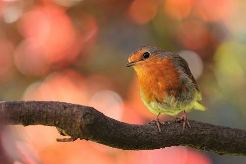 Inquisitive Bird_500x333.jpg