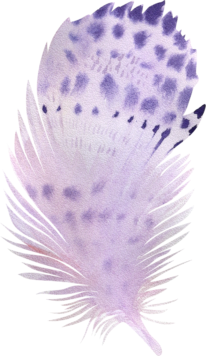 11 feather_696x1200.png