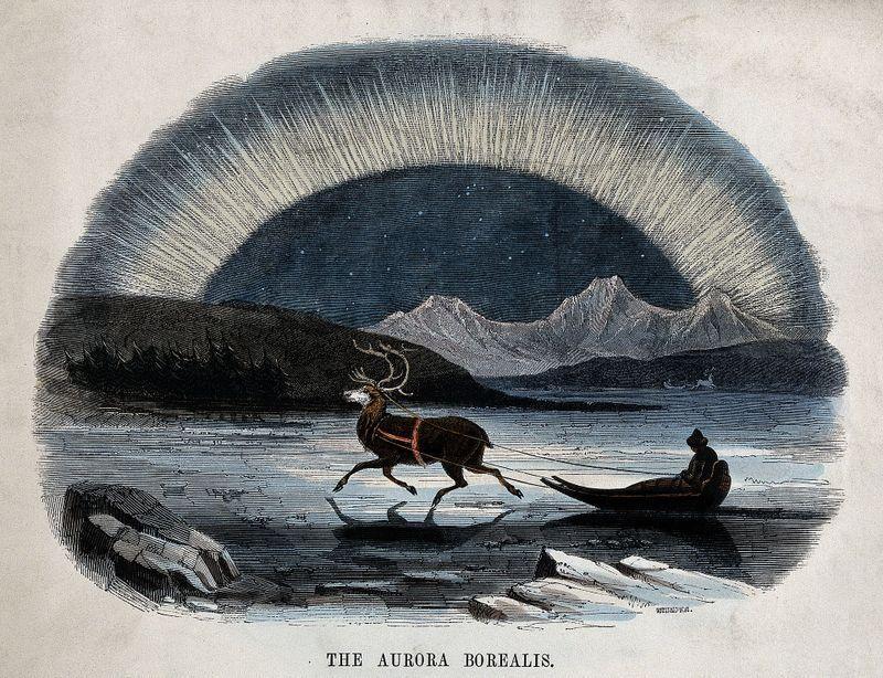Aurora Borealis Reindeer.jpg