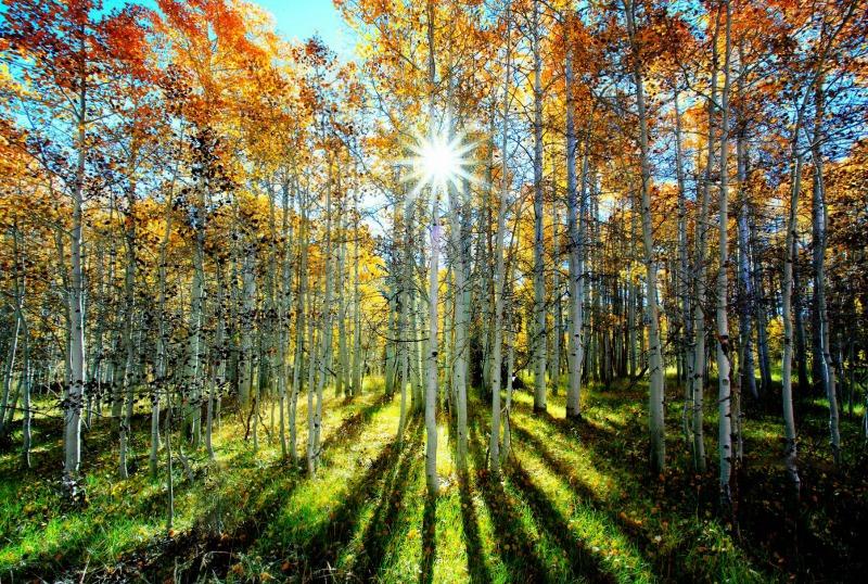 Rainbow Woods Happy Aspen_800x538.jpg