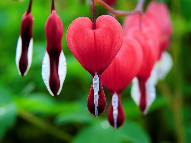 Heart Blossom Flower_640.jpg