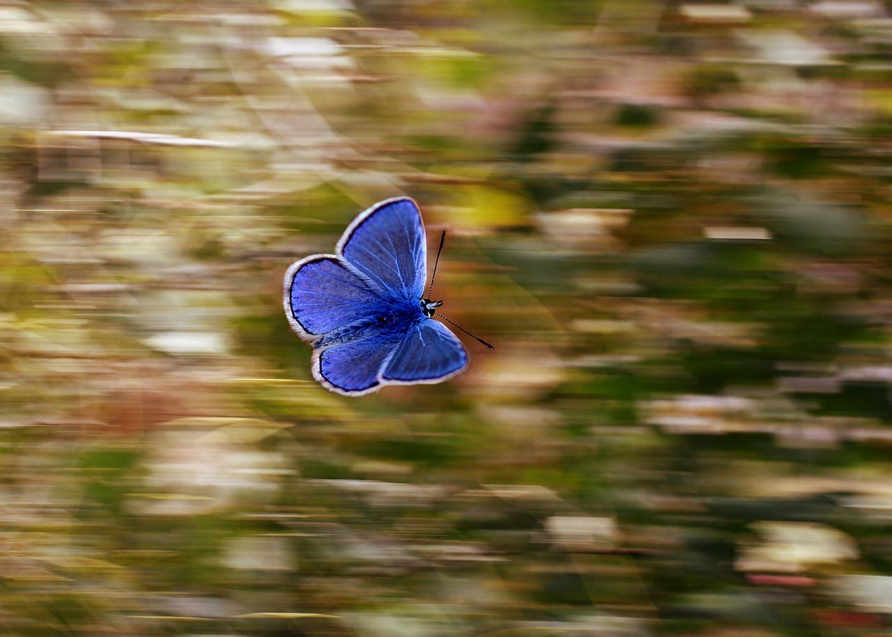 Butterfly in Flight_1280.jpg