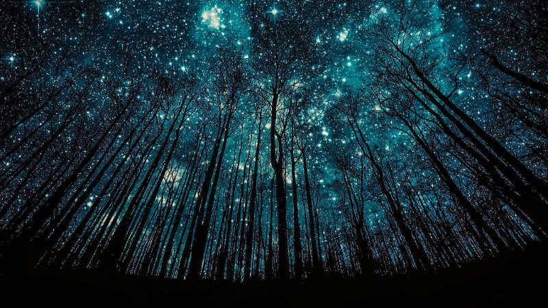 Blue Stars and Trees.jpg