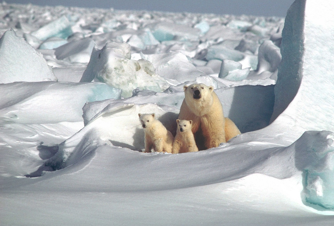 Polar Bear Mother and Cubs_1240.jpg