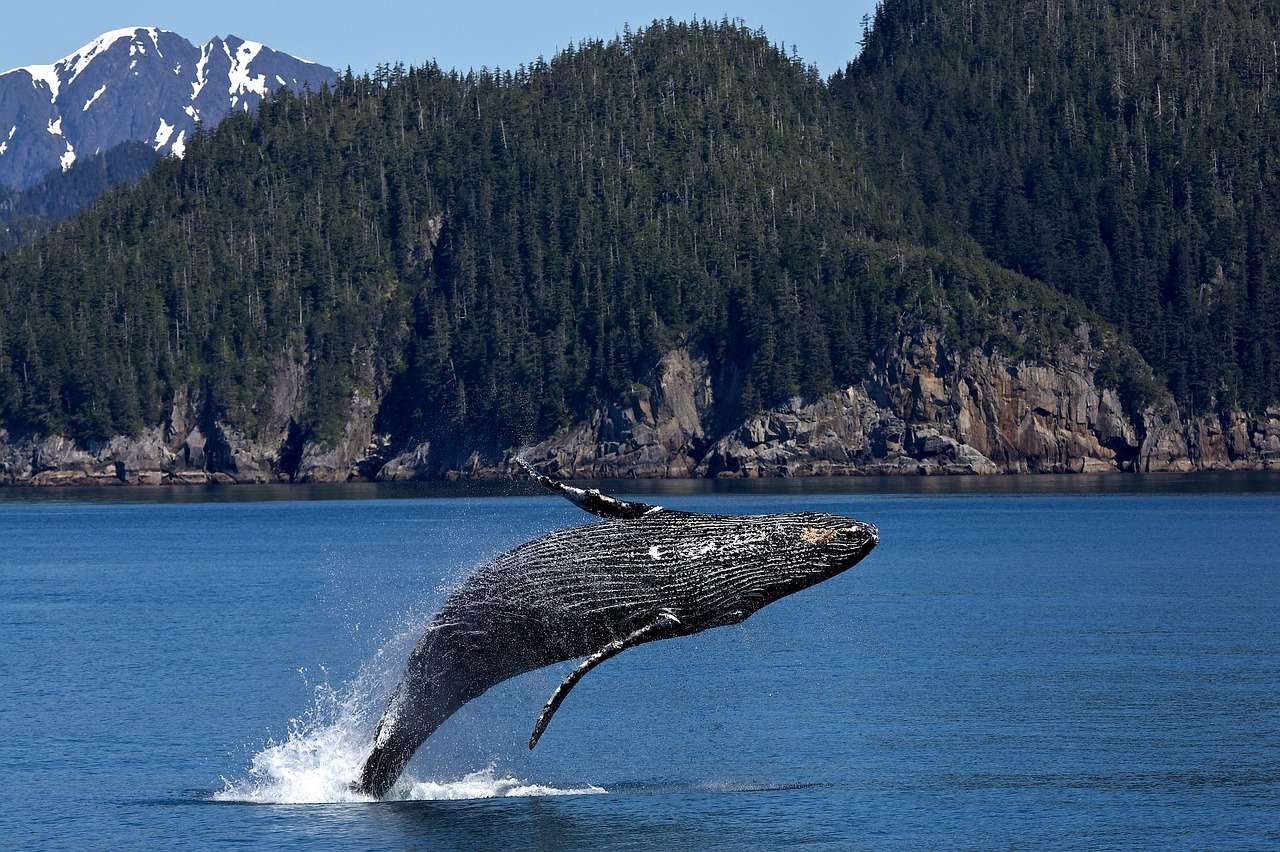 Breaching Humpback Whale_1280.jpg