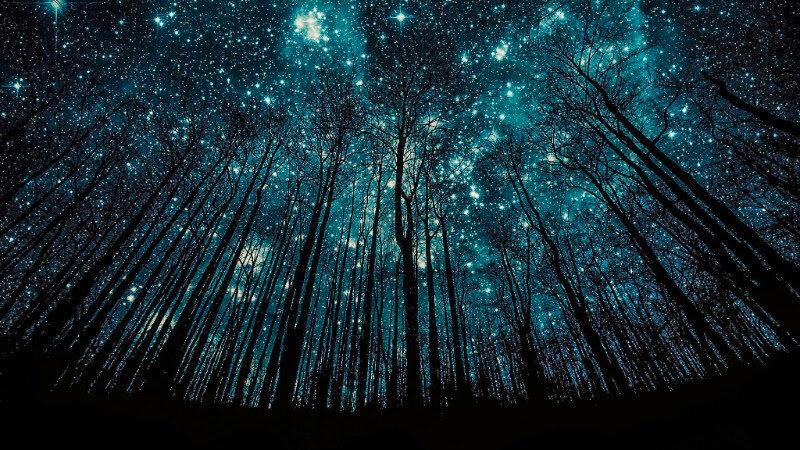 Blue Stars and Trees.jpg