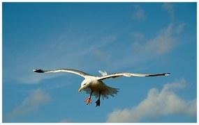 the-seagull-859529__180.jpg