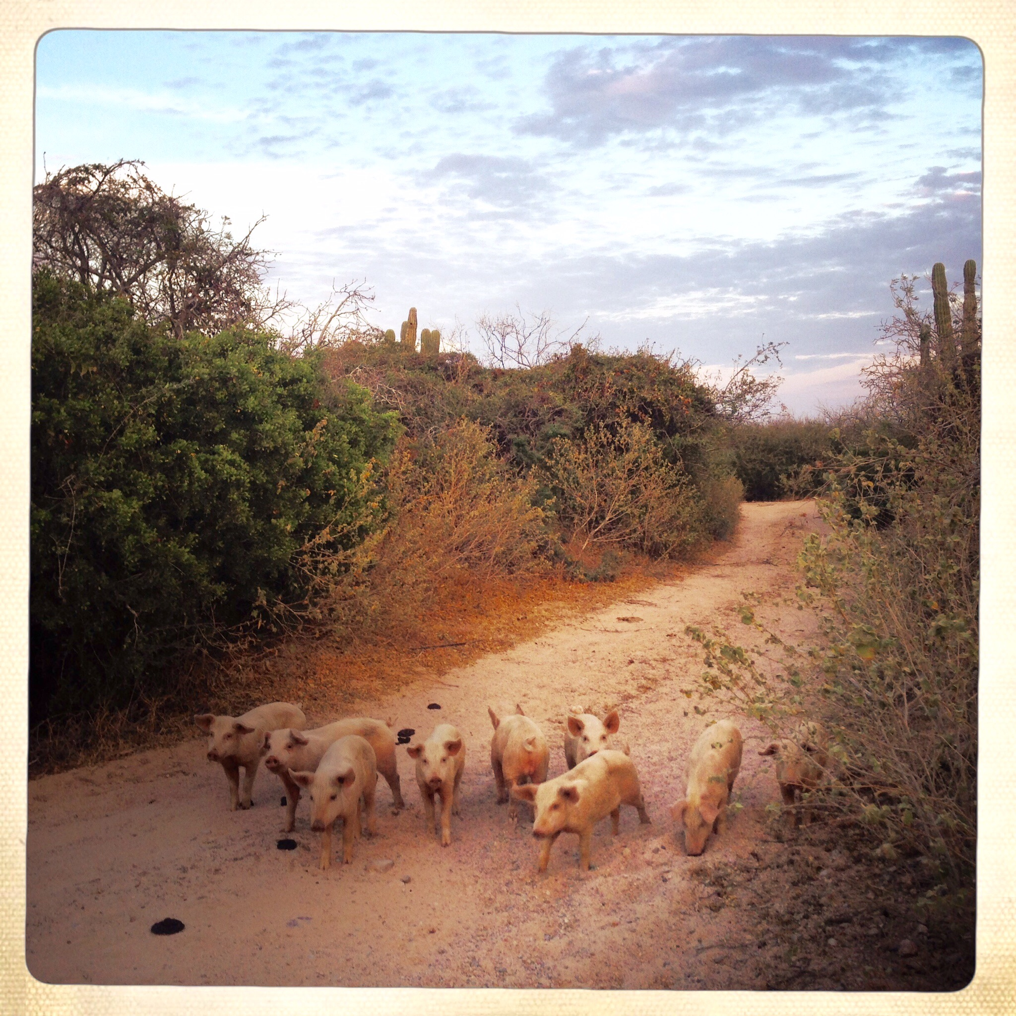 This herd of piglets seemed to chase us at times, snorting their way into our laughter. Photo by Liz Dasilva