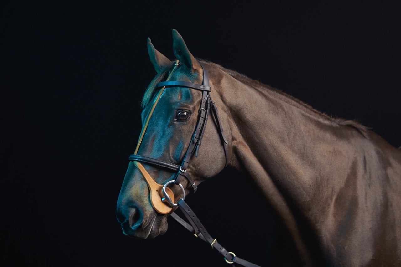 "The beautiful race horse ""Safari Journey"" photographed last week.  Many thanks to Mob films and Bark & Bite"