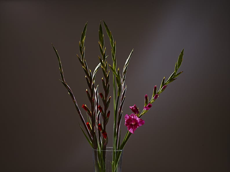 Todays flower shoot at the studio.