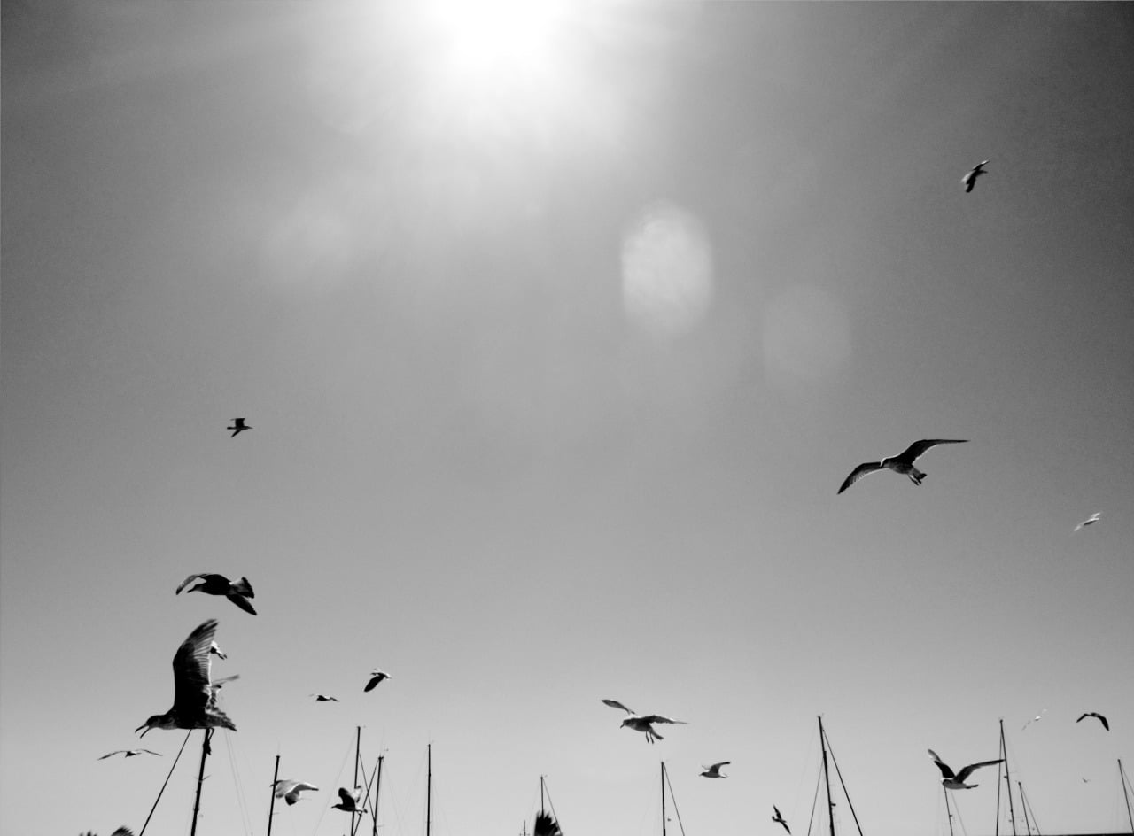 Birds fly over Olhao estuary Portugal