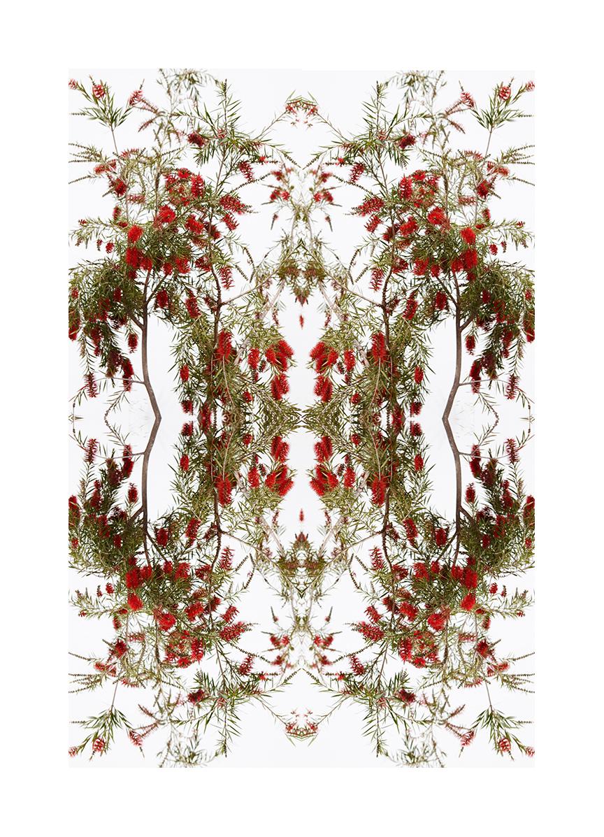 flower comp filter.jpg