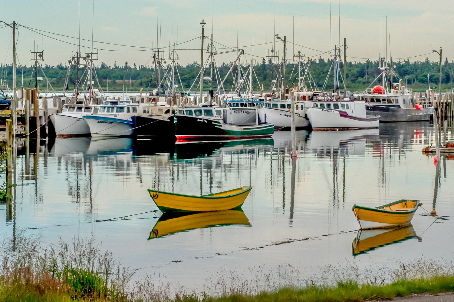 bay of fundy_113