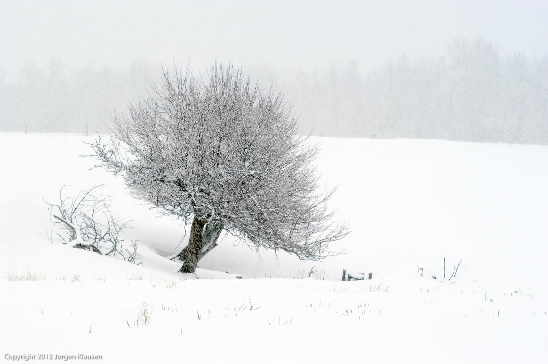 landscape_307