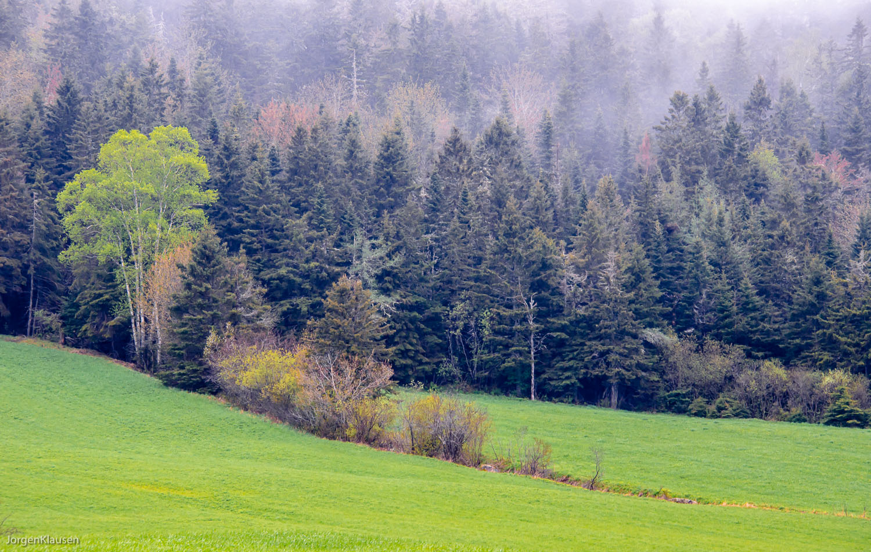 landscape_313