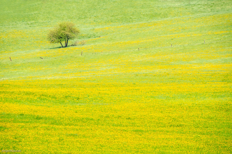 landscape_315