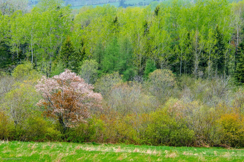 landscape_316
