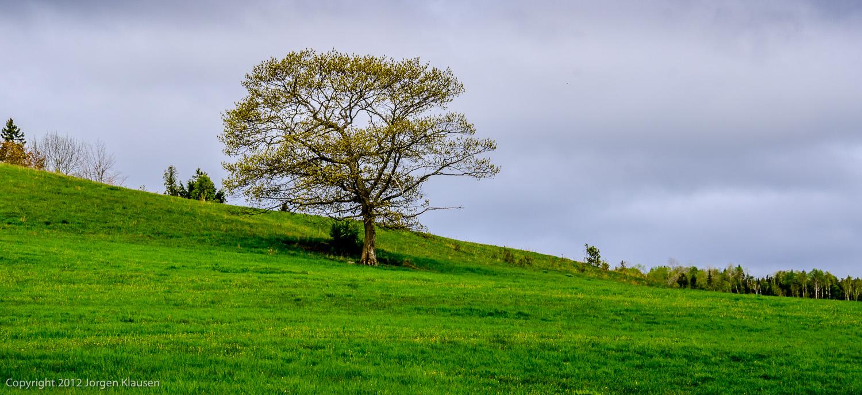 landscape_337