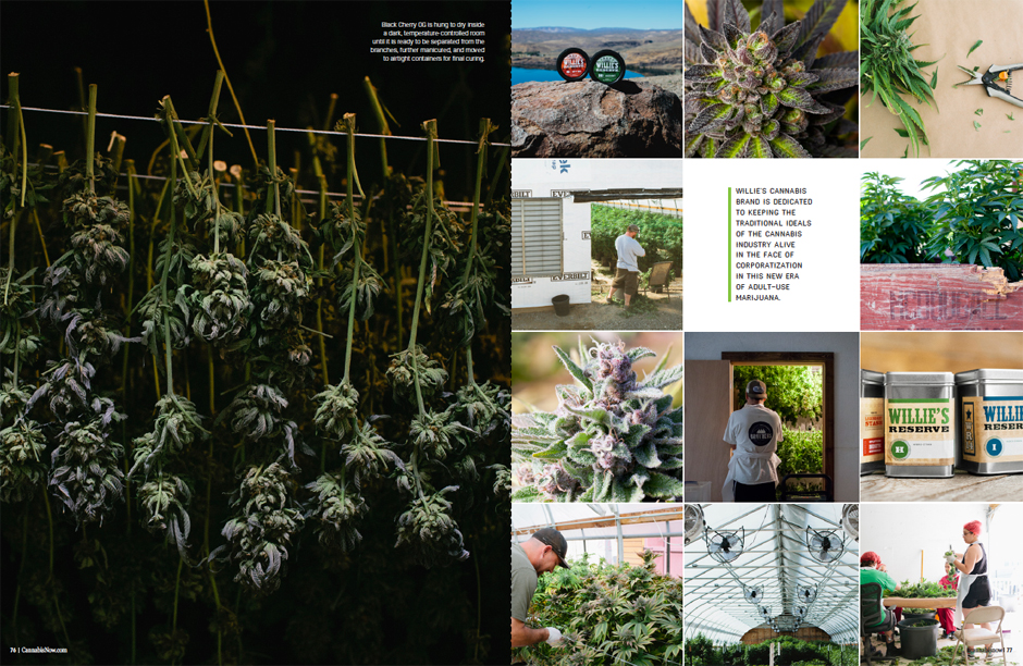 Cannabis Now, January 2017, Issue 24