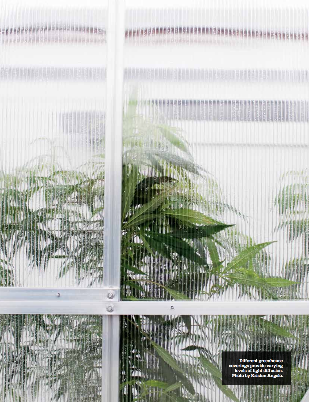 Sungrower & Greenhouse, Summer 2017