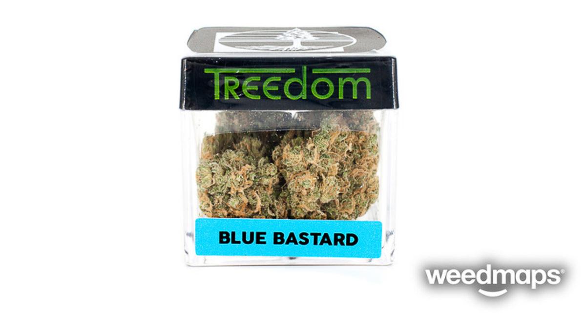 blue-bastard-treedom-1.jpg