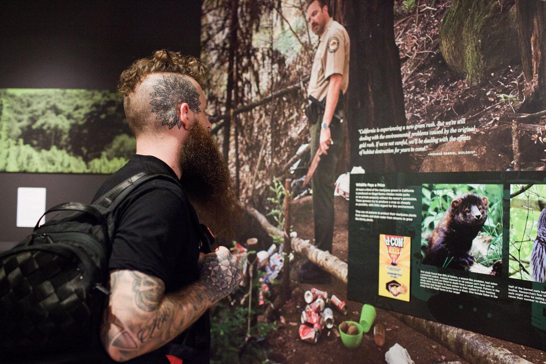 Oakland Museum of California Altered State: Marijuana in Califor