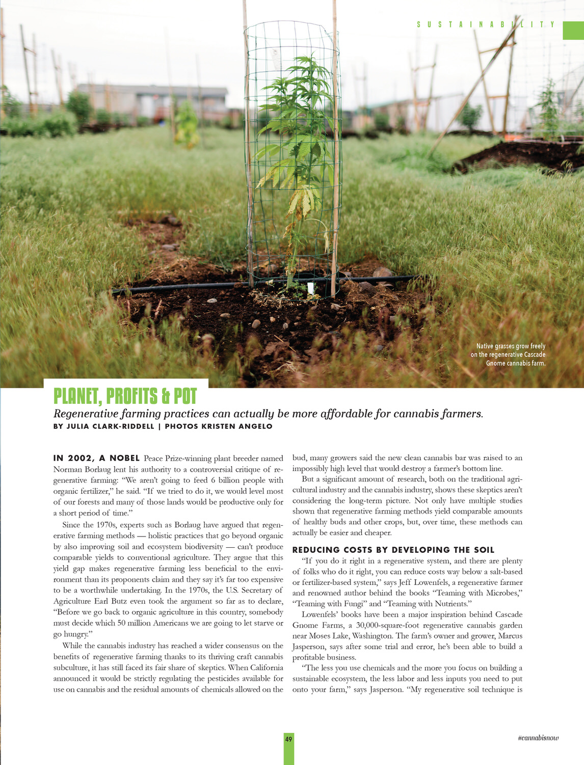 Cannabis Now, Issue 33