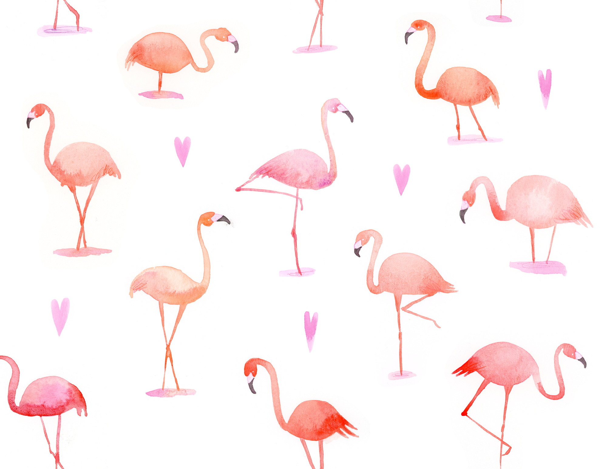jessengle_flamingos.png