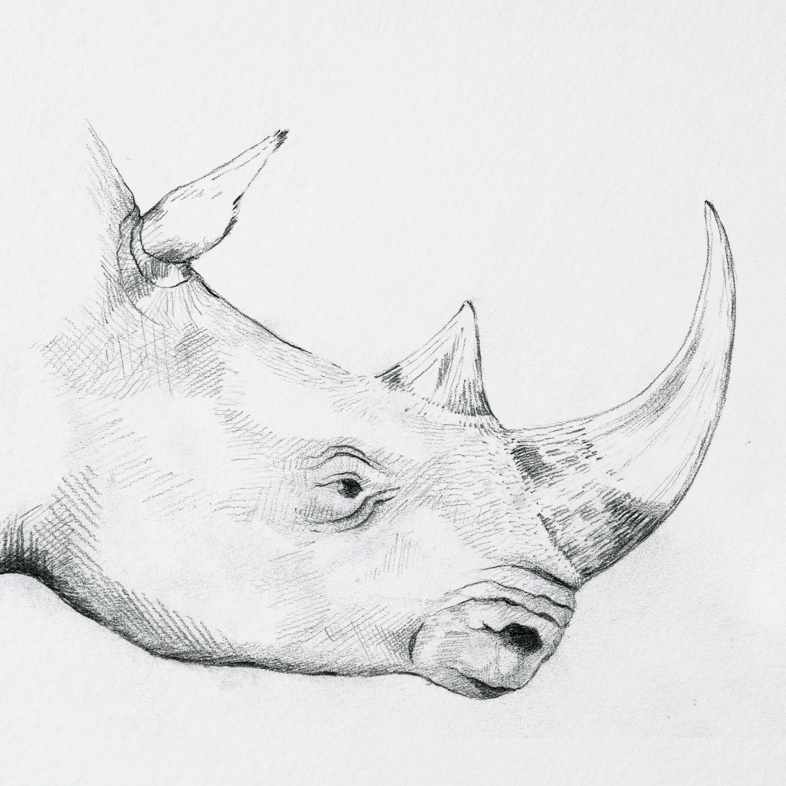 rhino_back2.png