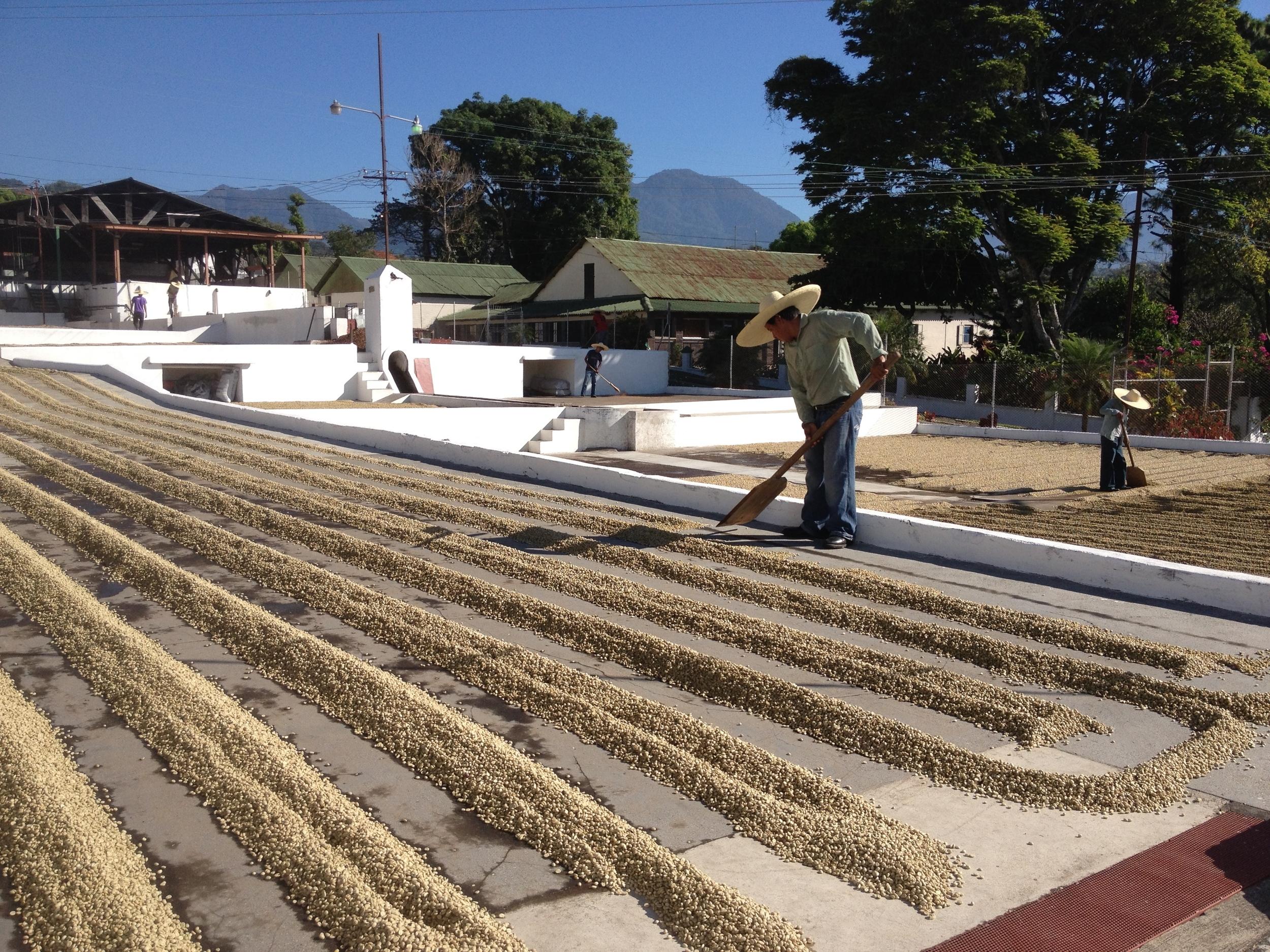 Drying patio at Finca San Jeronimo Miramar.