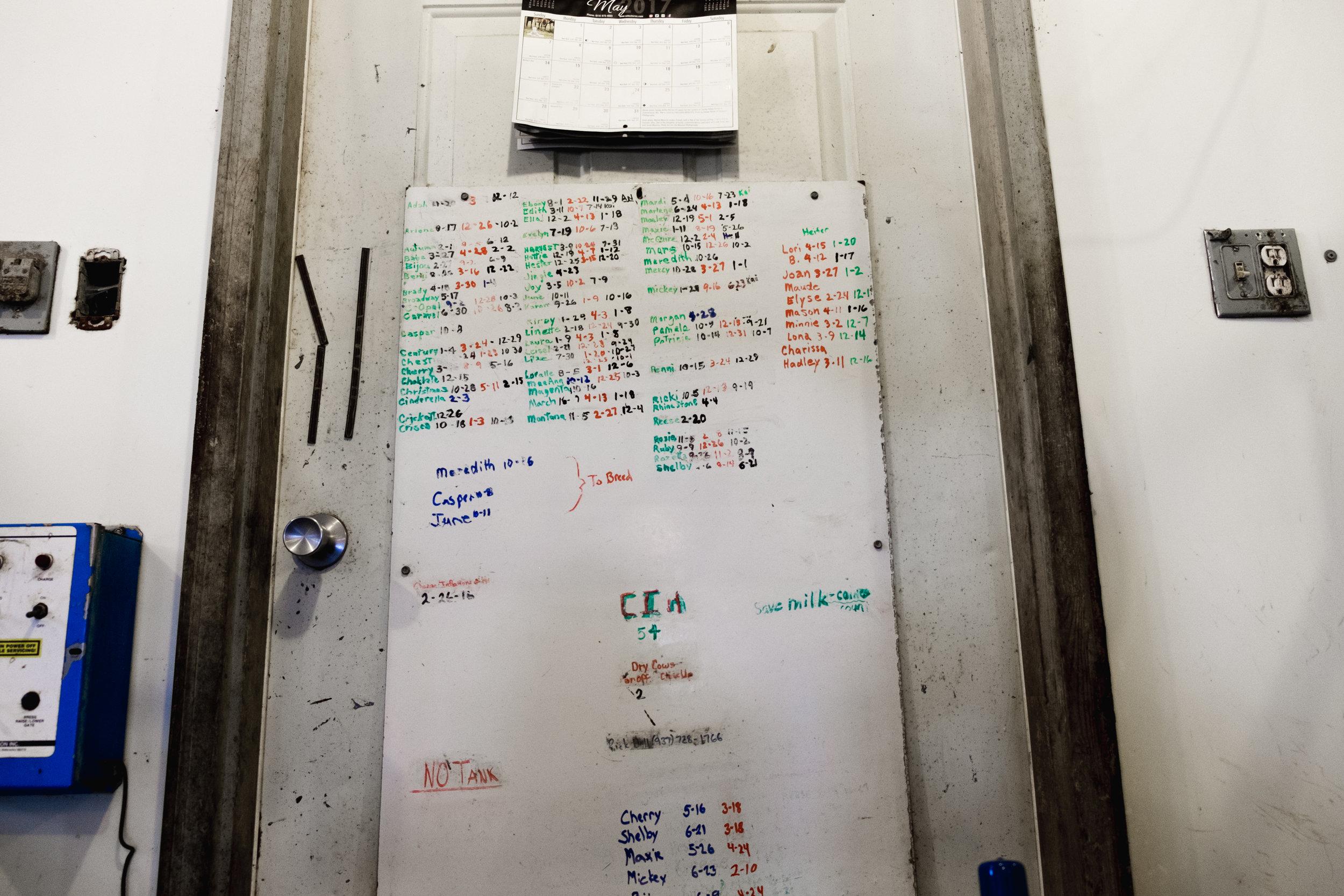 The milking schedule
