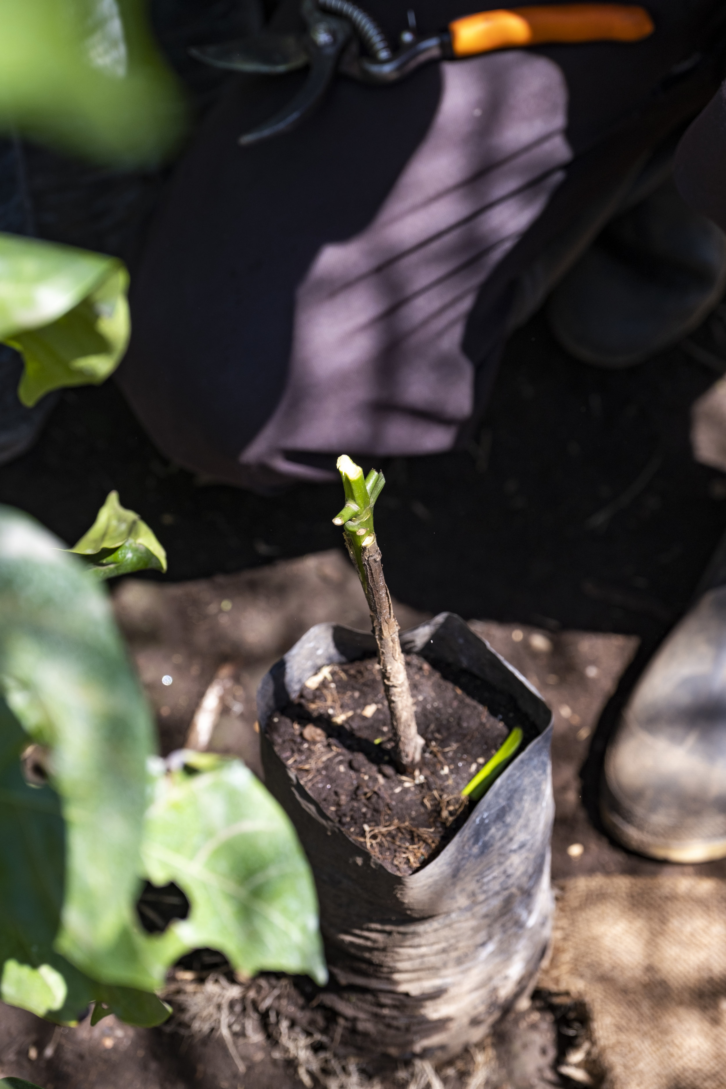 hybridplants08.JPG