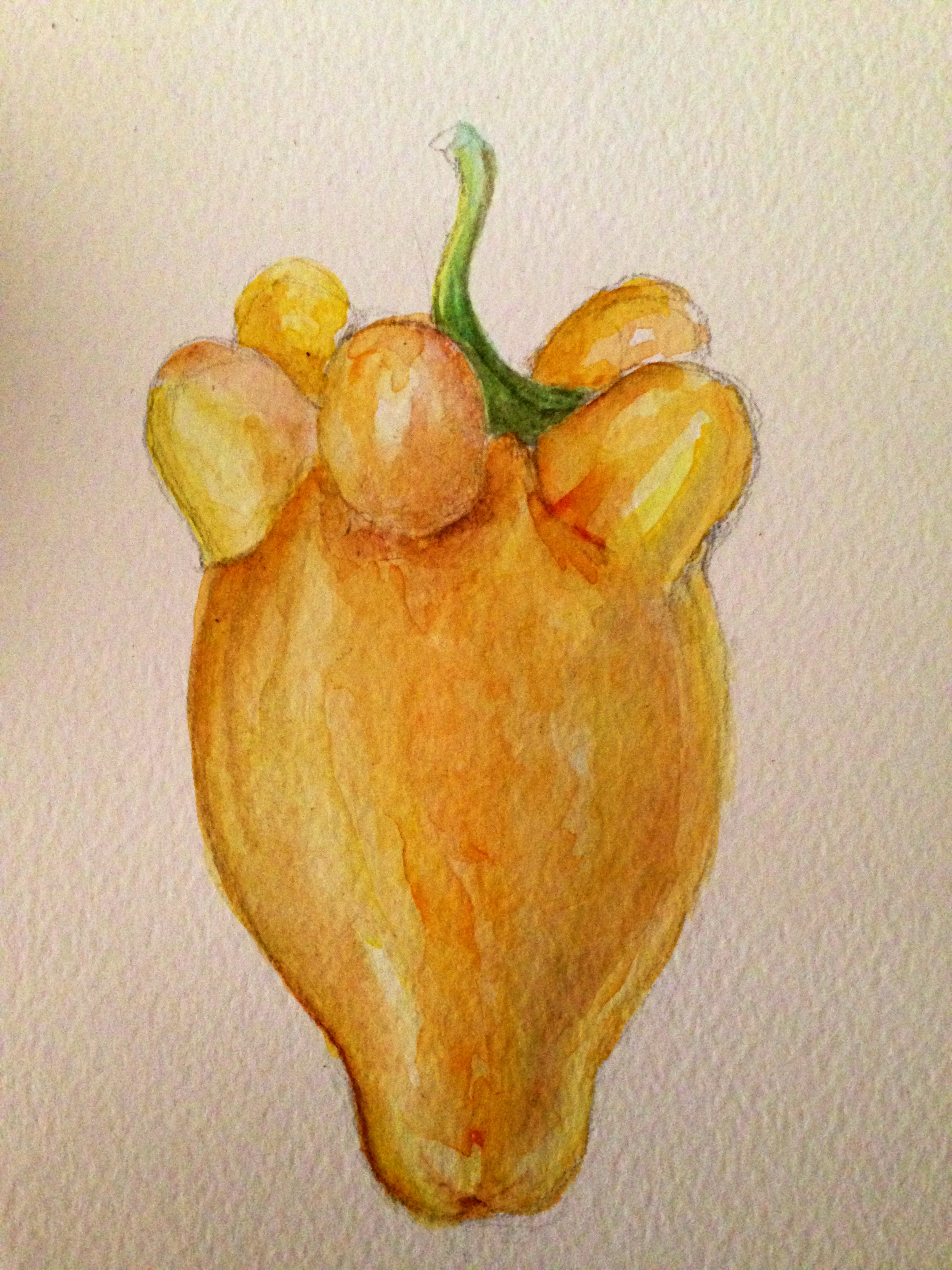 The finished watercolour of the whole fruit...