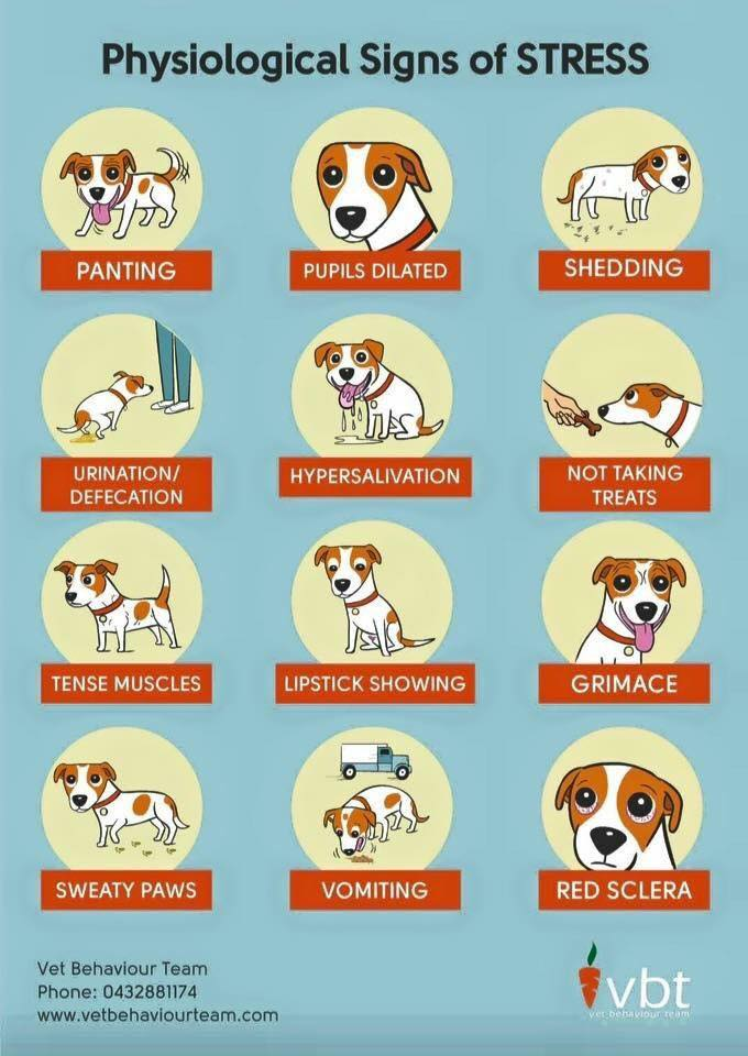 Search for infographics online to better understand your dog's body language. This one is from  Vet Behaviour Team  online