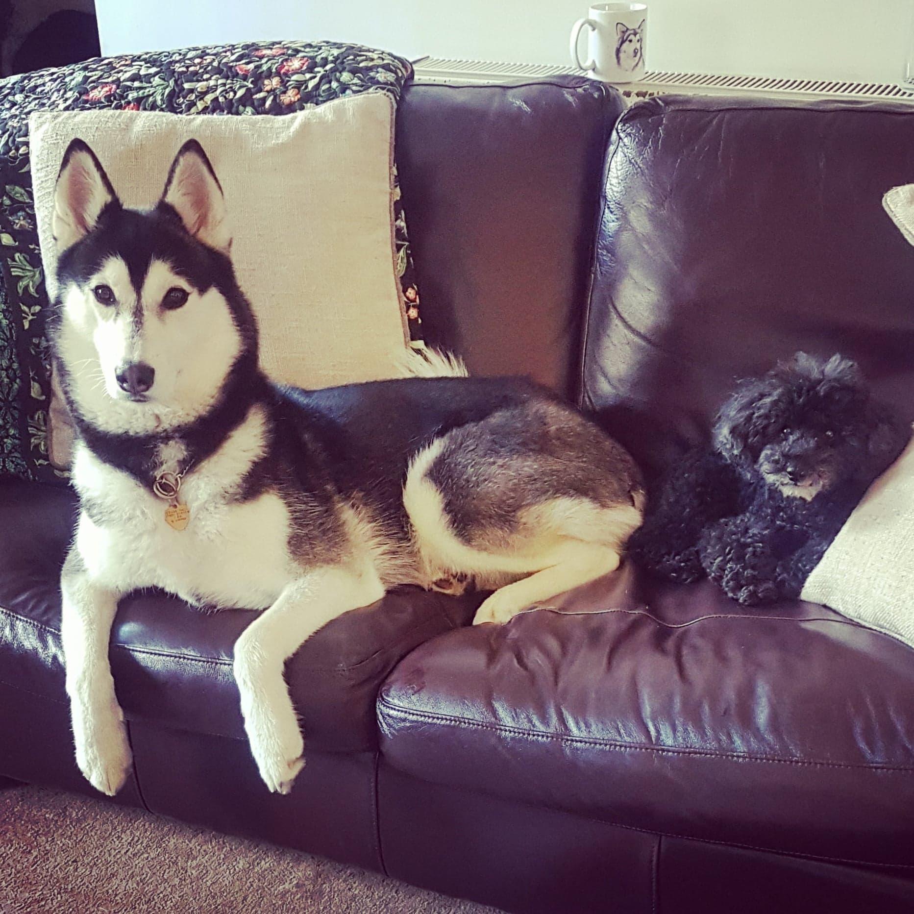 Viv and Jaxx