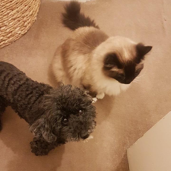 Jaxx and Samson