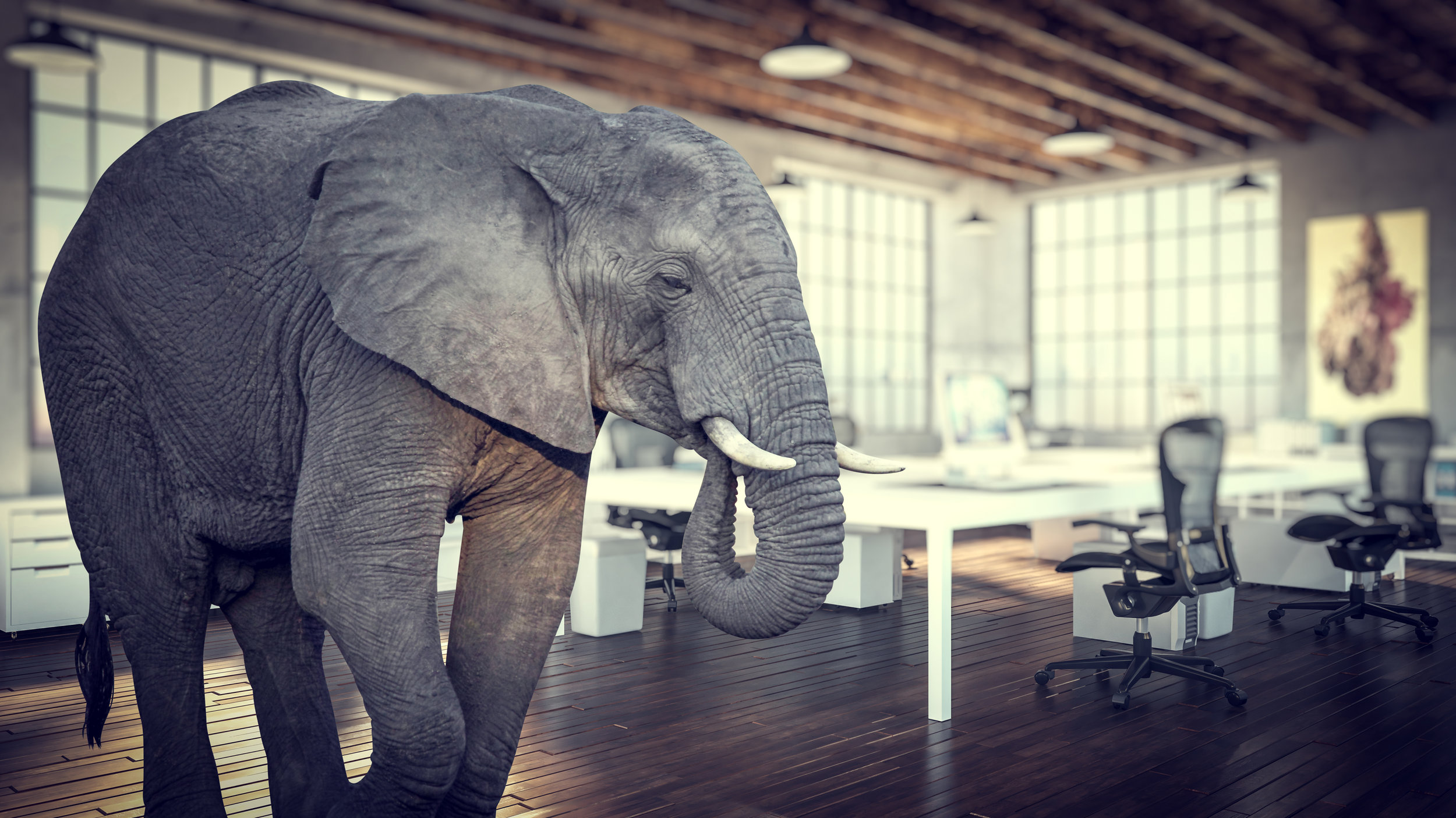 The Elephant in the room is CLIMATE CHANGE, but we still haven't deal with the probable  consequences for our entire way of lie.