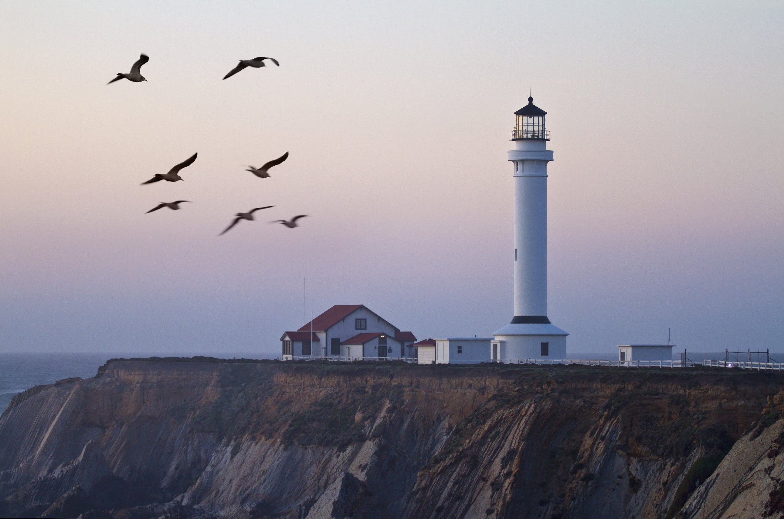 Lighthouse Gulls