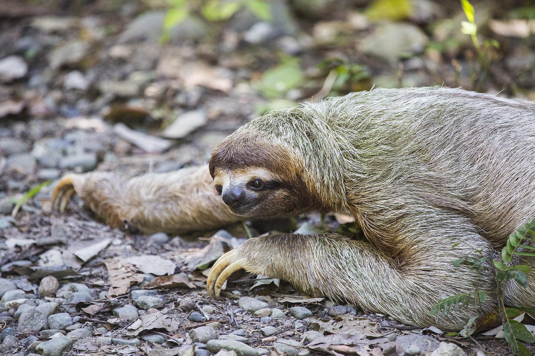 SlothOnTheRoad5535lr.jpg
