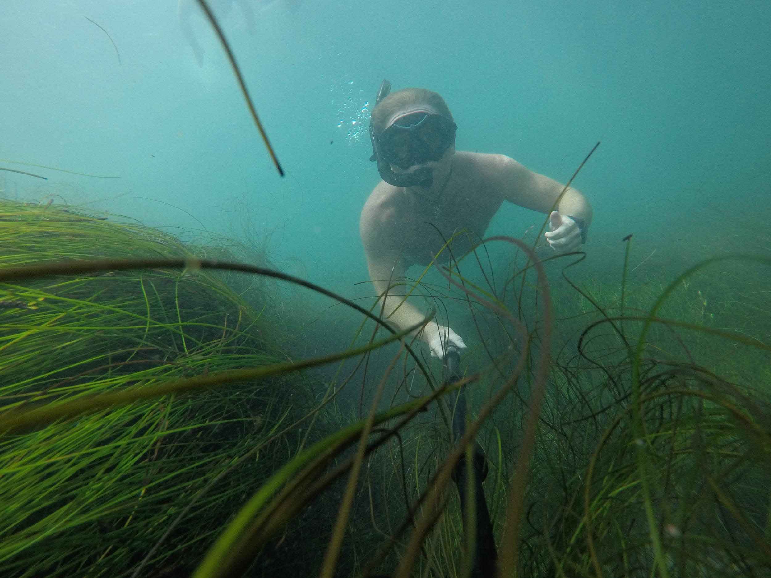 Dive water diving outdoors excursion SEA laguna beach CA Ella Lea Eric Belisa Chad Seal PUPs G0080766.JPG