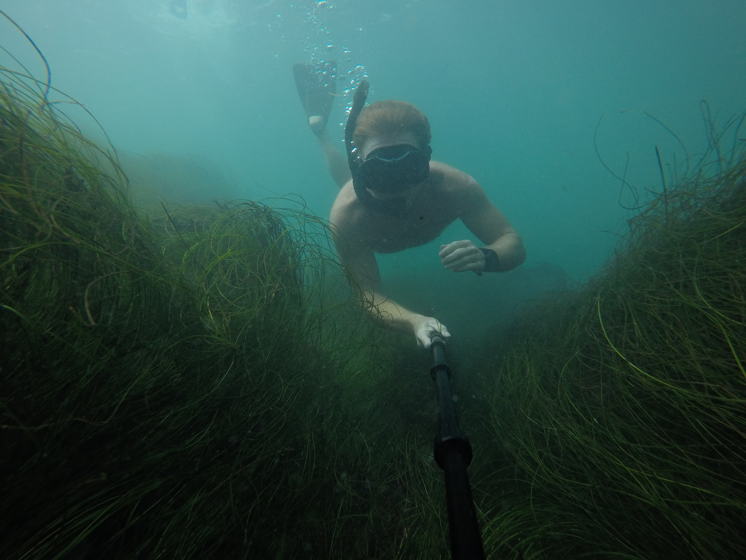 Dive water diving outdoors excursion SEA laguna beach CA Ella Lea Eric Belisa Chad Seal PUPs G0080761 (1).JPG