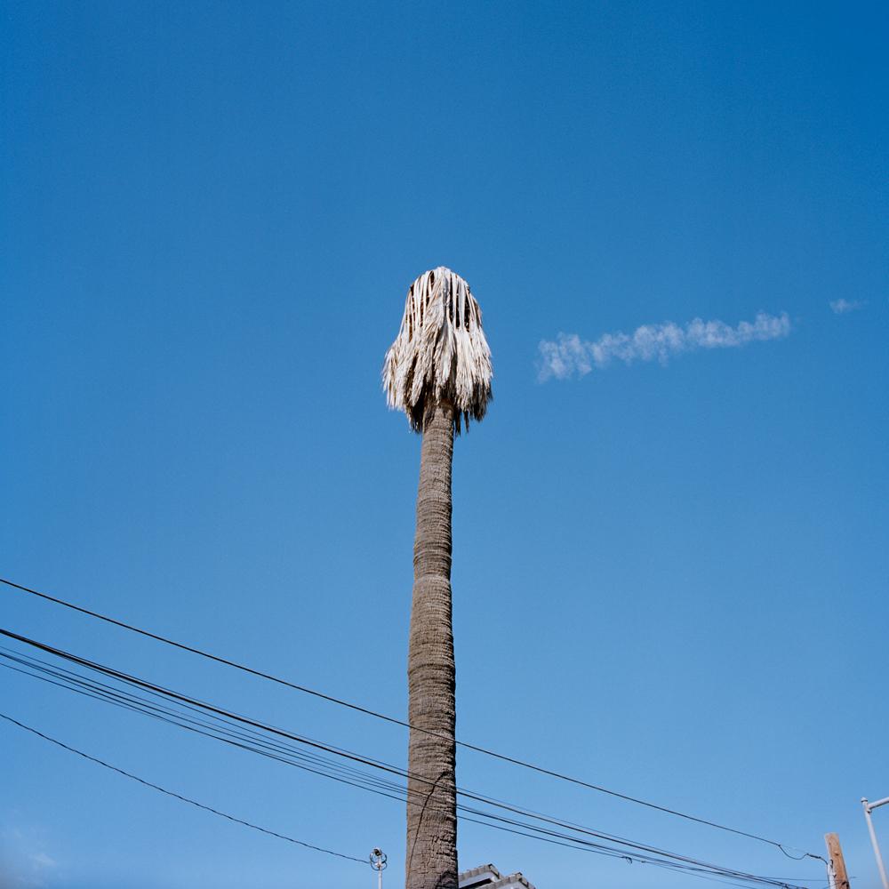 ca-longbeach-nopalmtothispalmtree2-10312015.jpg