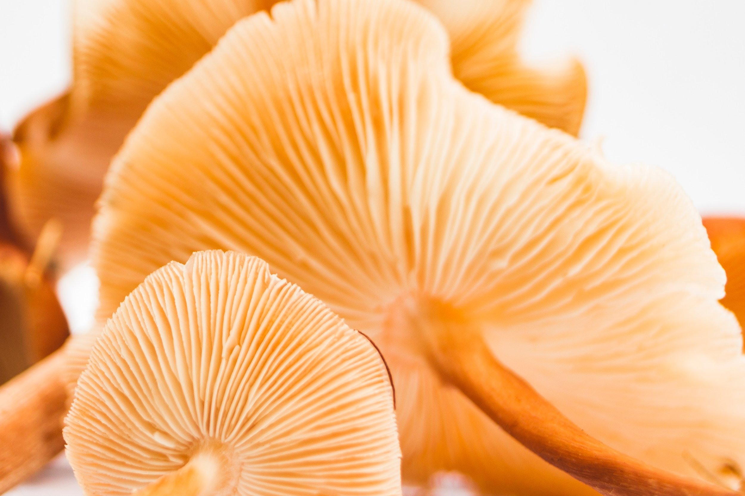 Healing Endometriosis Symptoms with Medicinal Mushrooms.jpg