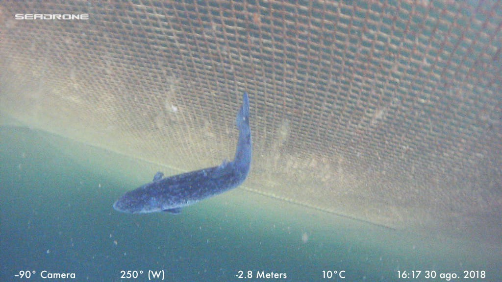- Downward photo of fish cage wall.