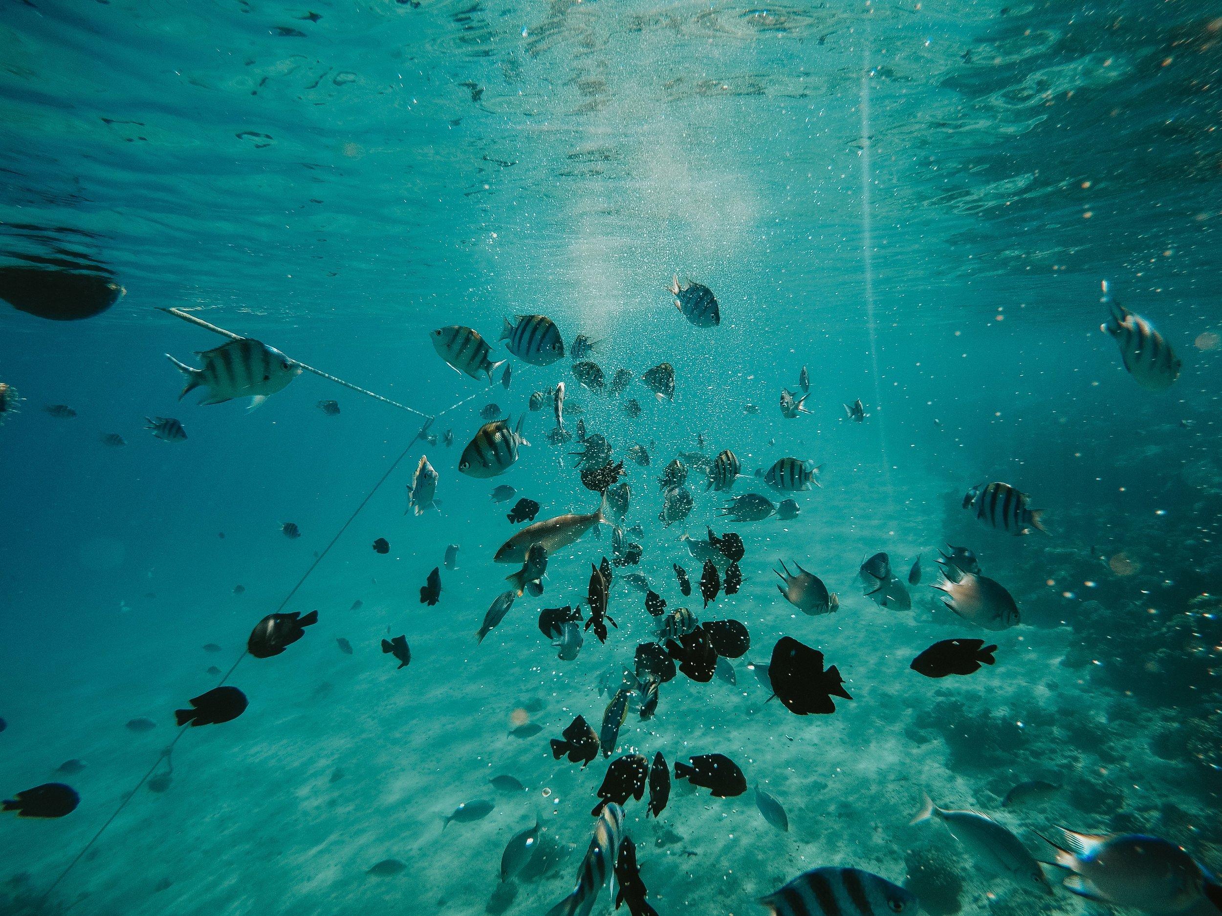 animal-animal-photography-aquatic-1821724.jpg