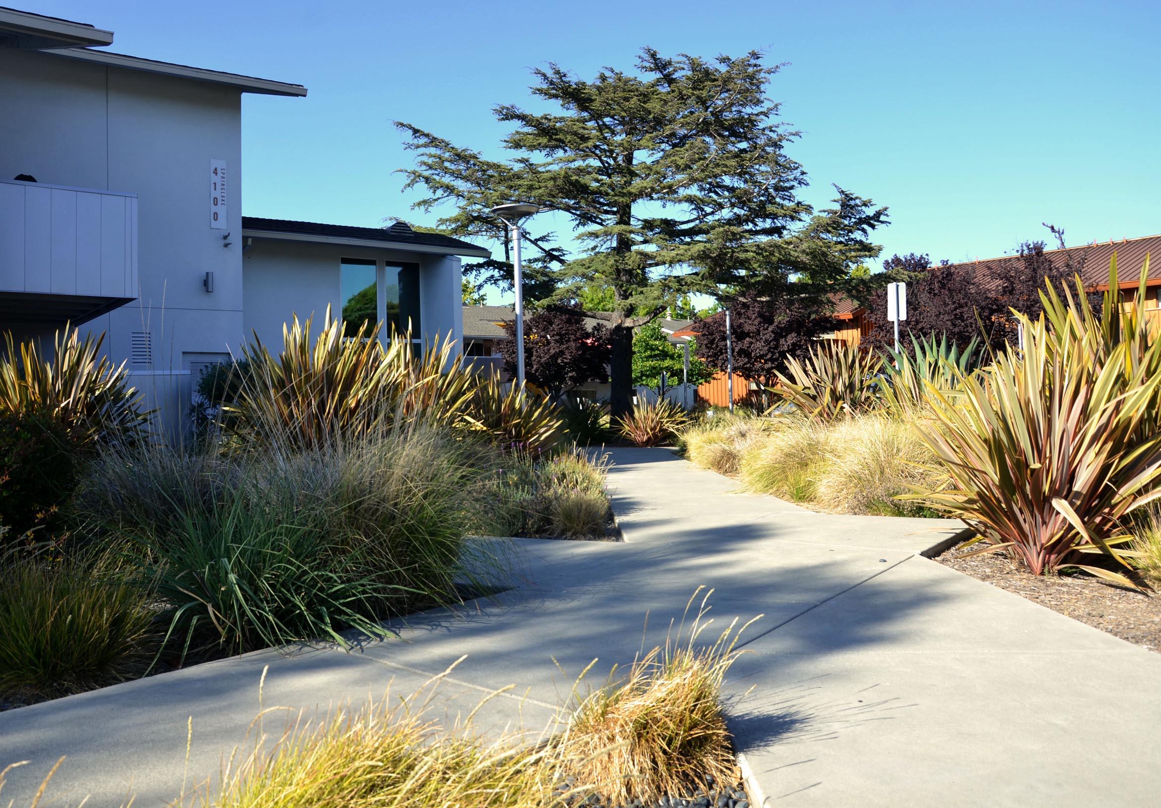TINA CHEE landscape studio_LAKESIDE-path 2.jpg