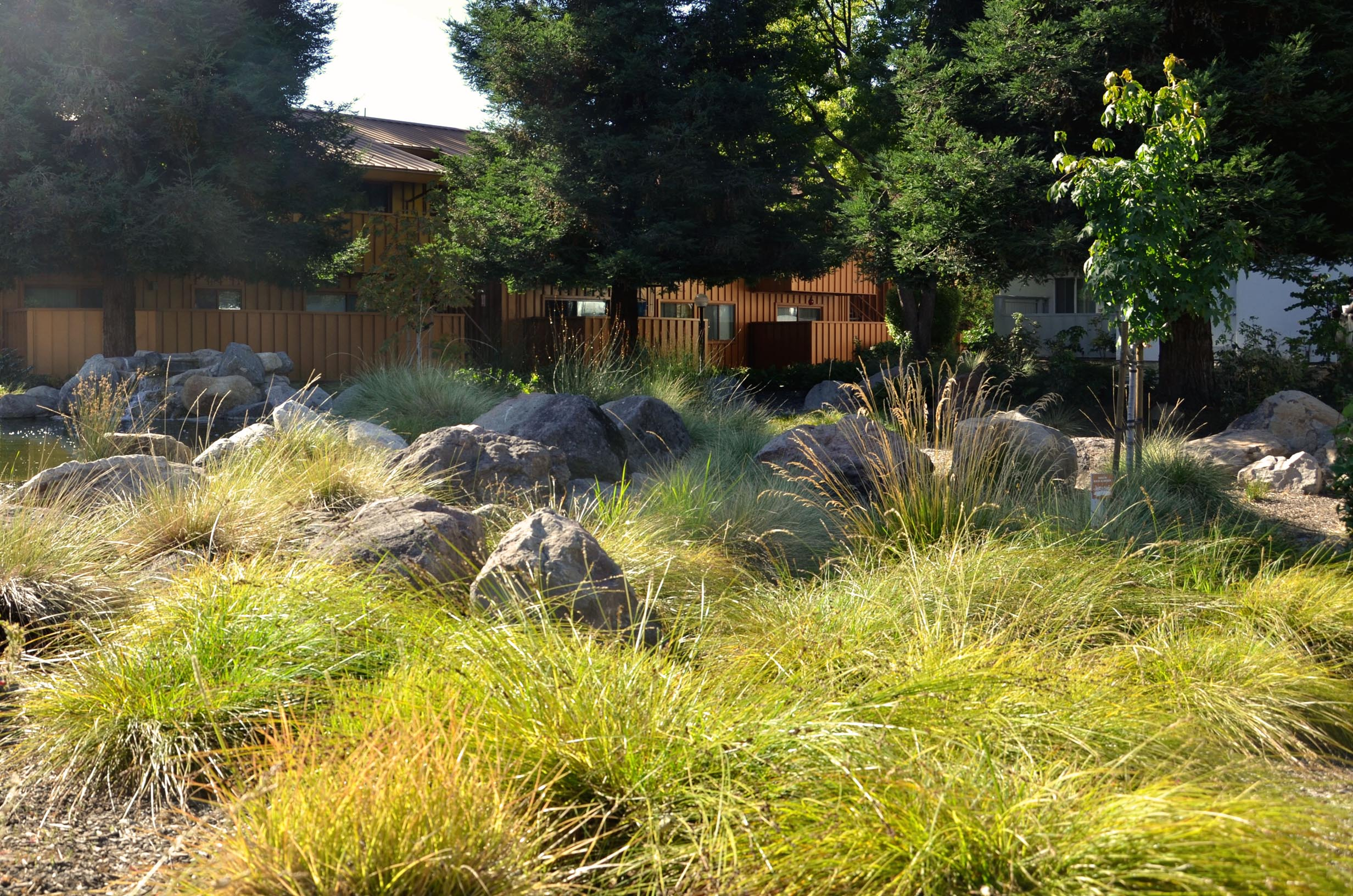 TINA CHEE landscape studio_LAKESIDE-meadow.jpg