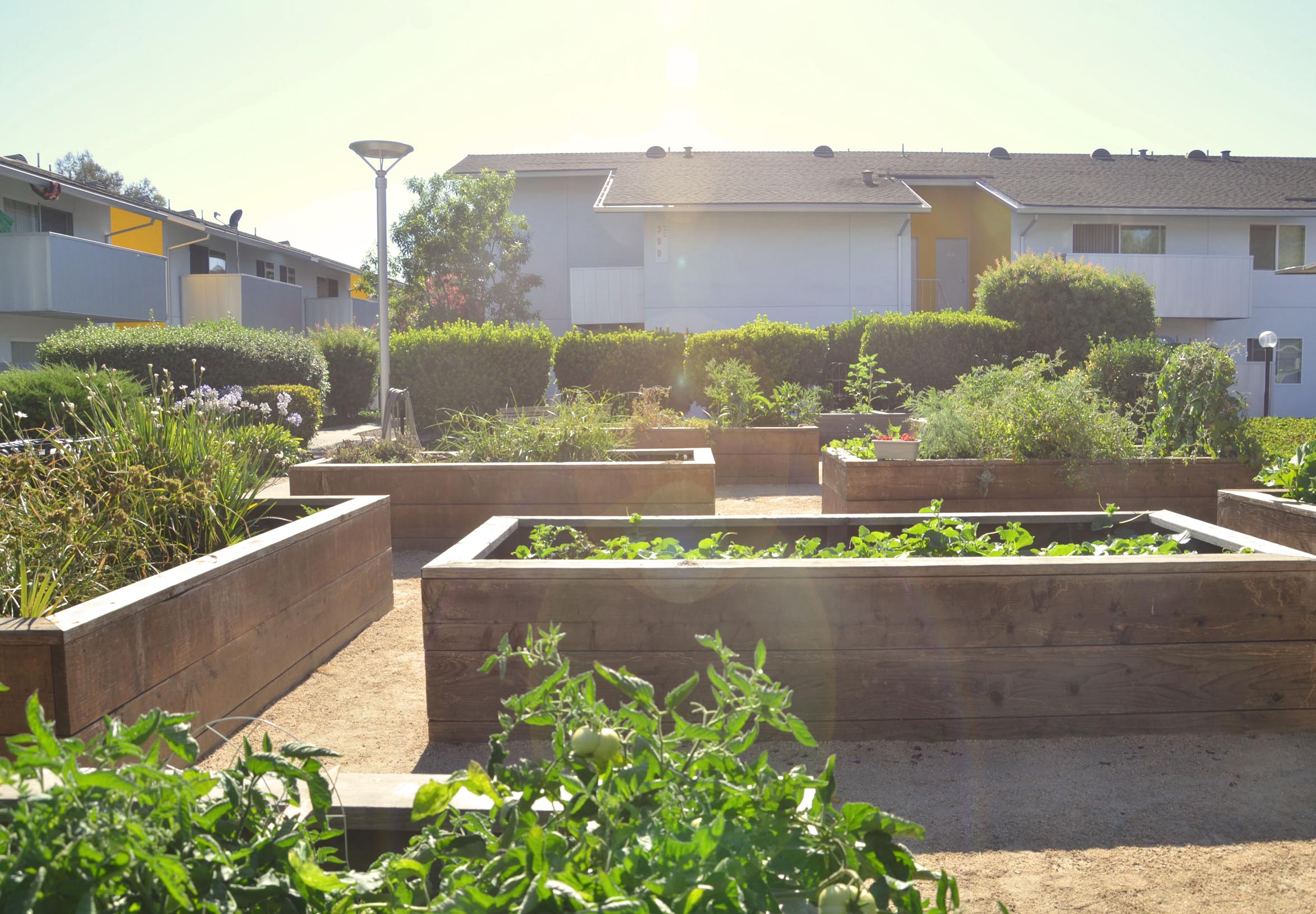 TINA CHEE landscape studio_LAKESIDE-community garden.jpg