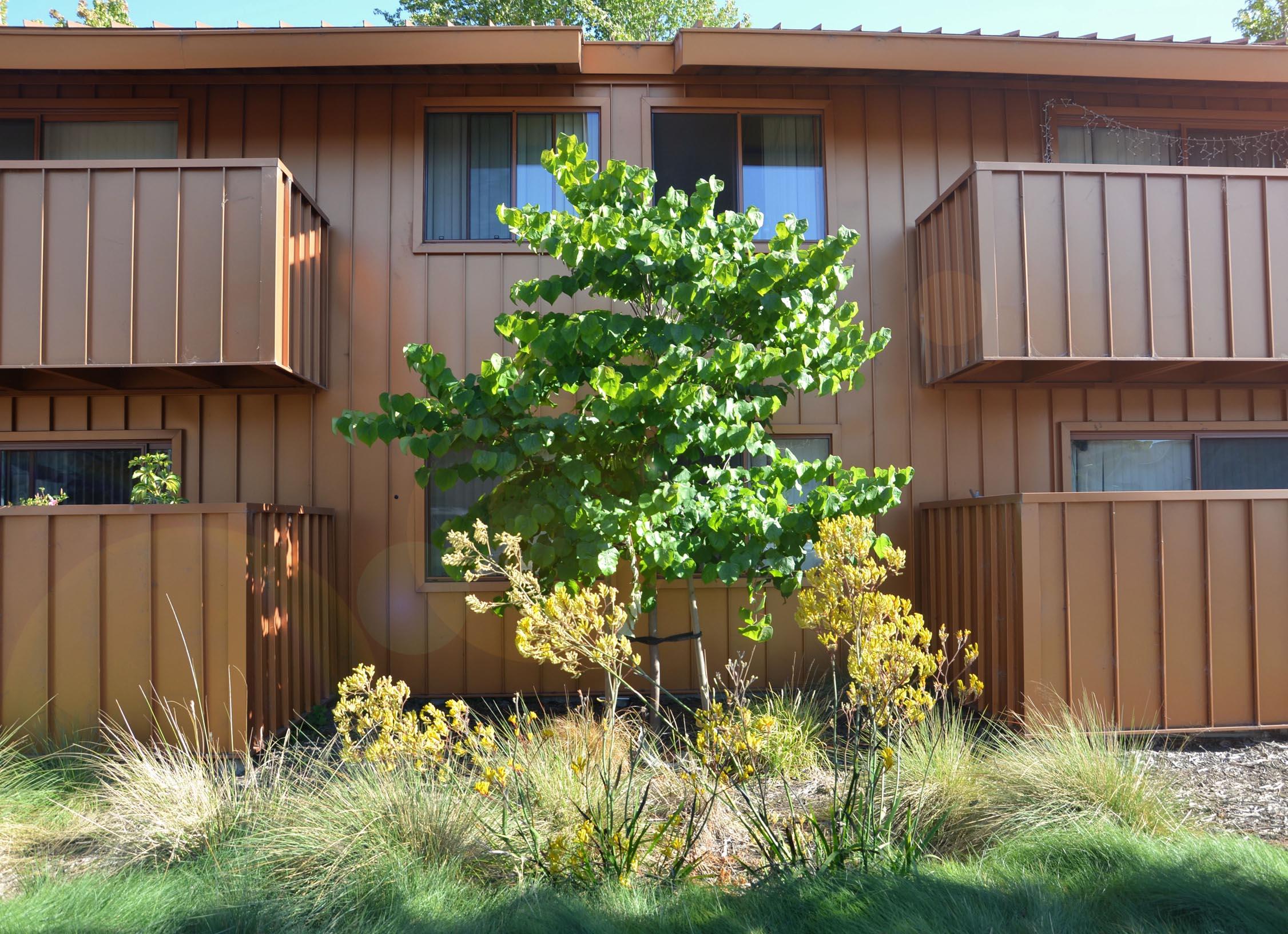 TINA CHEE landscape studio_LAKESIDE-bldg garden 1.jpg